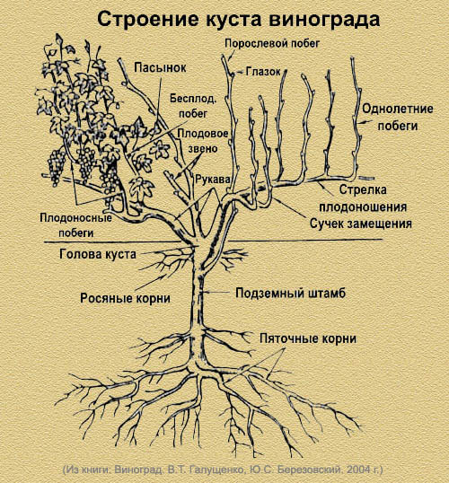 Биология деревьев